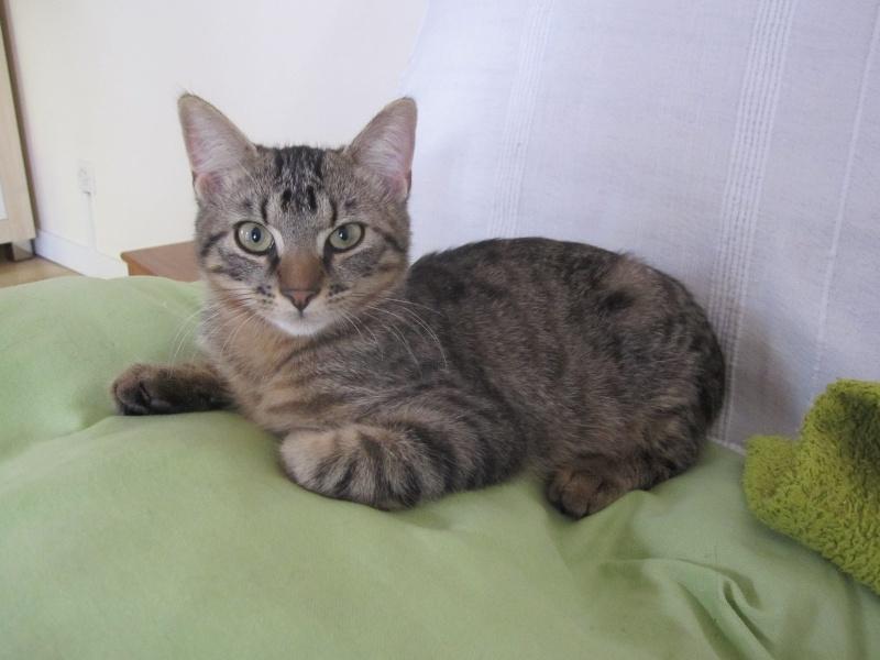 Jimmy, chaton mâle brown tabby né le 23/05/2014 Img_0510