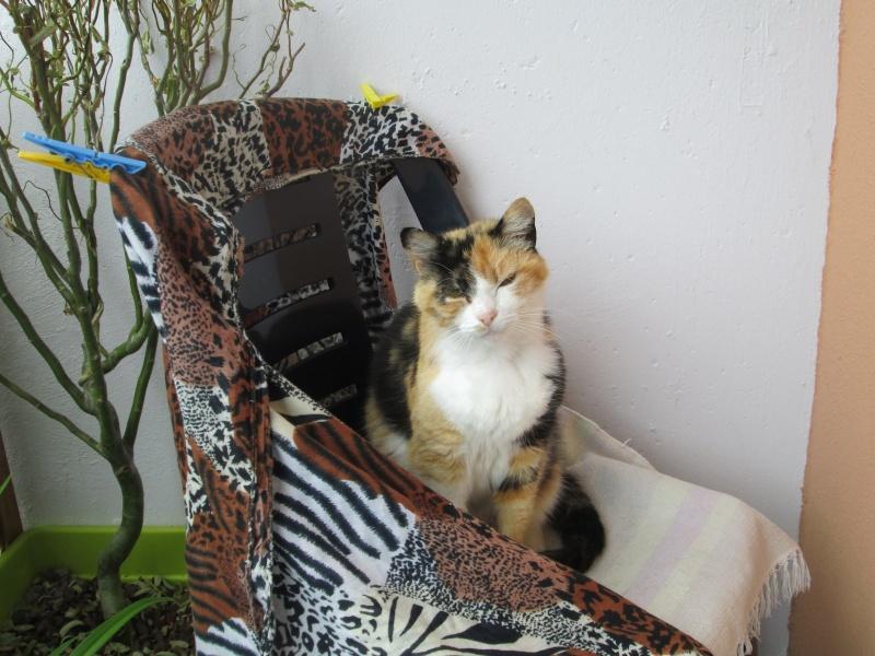 Tatoune, femelle type européen, tricolore, née le 01/03/2002 en don libre Img_1614