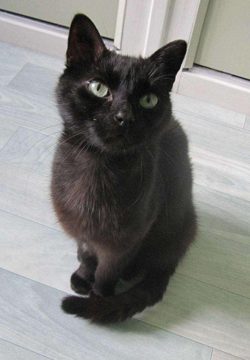 INZ0, chat européen, robe noire, né le 01/09/2013 Img_7314