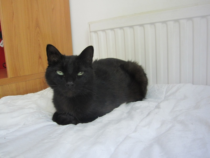 INZ0, chat européen, robe noire, né le 01/09/2013 Img_7316
