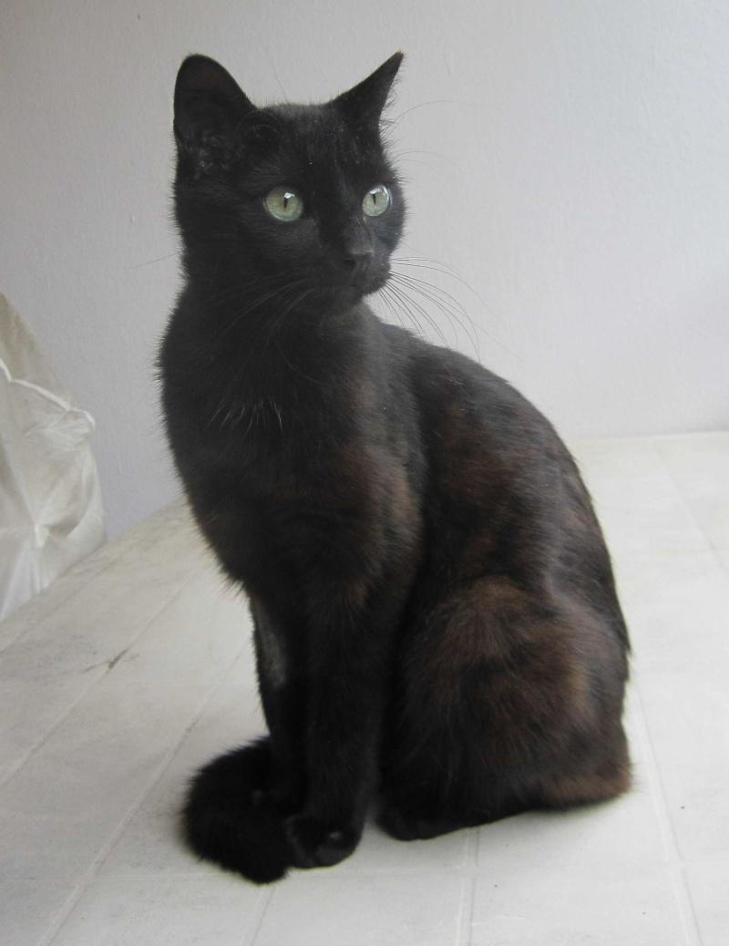 INZ0, chat européen, robe noire, né le 01/09/2013 Img_7319
