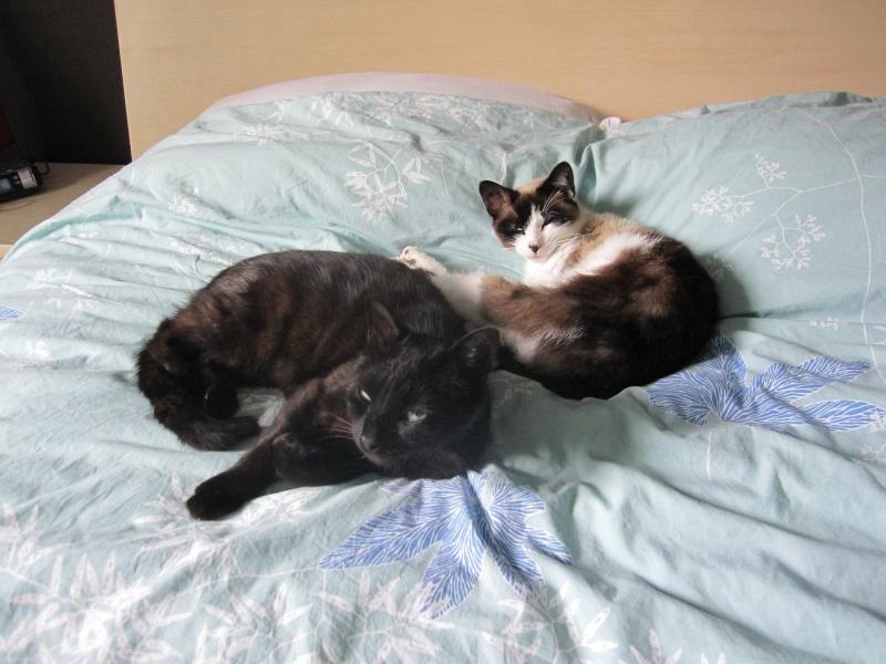 INZ0, chat européen, robe noire, né le 01/09/2013 Img_7322