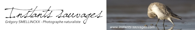 www.instants-sauvages.com Banniy10