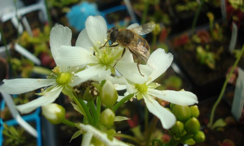 Ces insectes qui se font manger Dsc07715