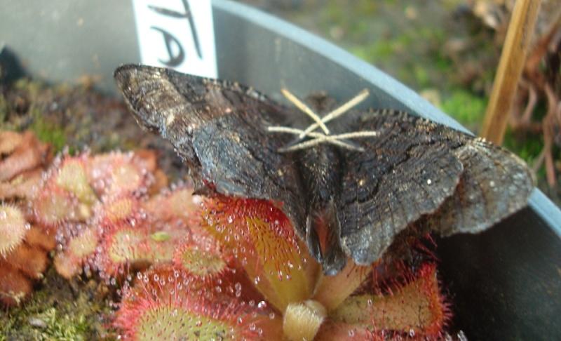 Ces insectes qui se font manger Dsc07813