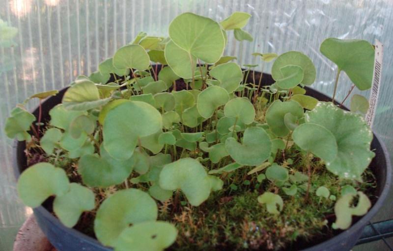 Les Plantes de Ted82 [tome 2] - Page 2 Dsc08057