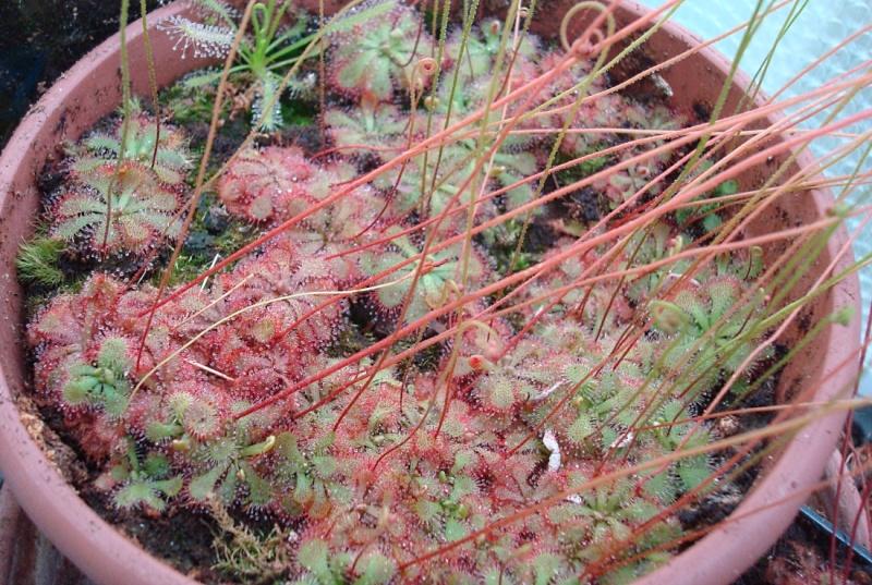 Les Plantes de Ted82 [tome 2] - Page 2 Dsc08142