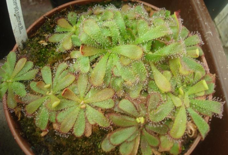 Les Plantes de Ted82 [tome 2] - Page 4 Dsc08959
