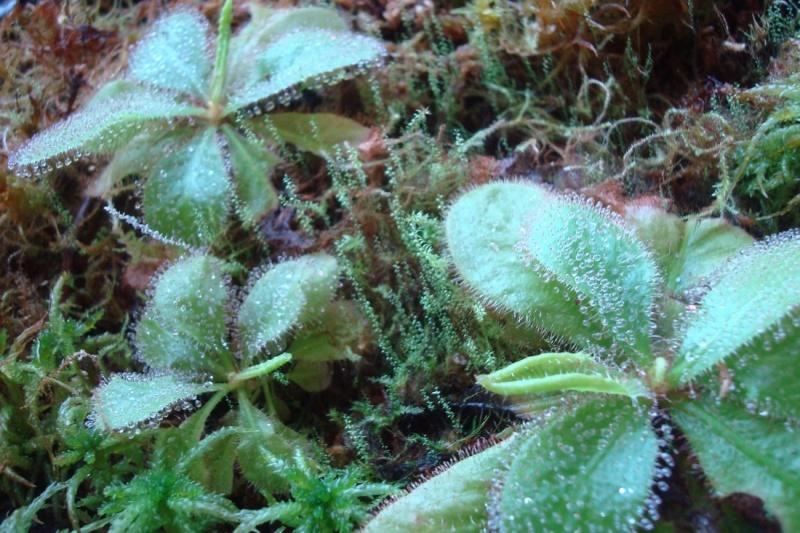 Les Plantes de Ted82 [tome 2] - Page 6 Dsc09156