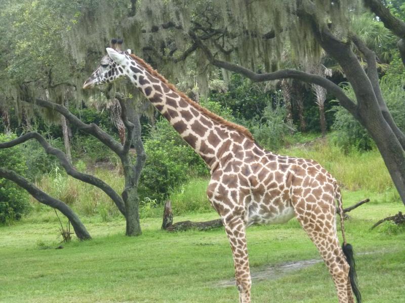 Voyage en famille en Floride - juillet 2013 - Page 5 P1000515