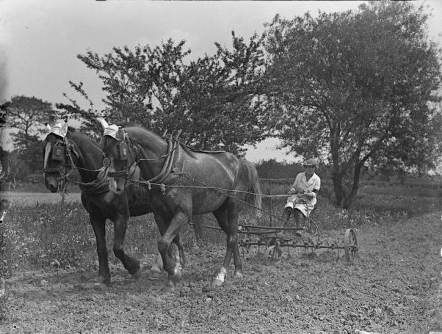 14-18 : Trois robustes paysannes Wla-q310