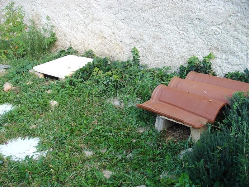 1ère hibernation canton de Vaud ! 00310