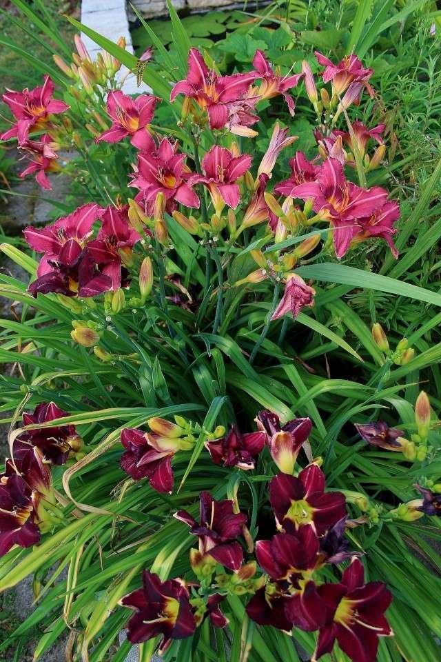 j'ai descendu dans mon jardin - Page 3 Rose_f10