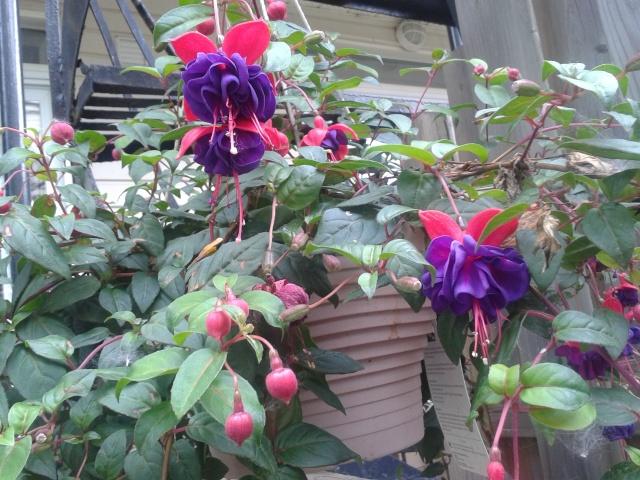 une nouvelle plante mystère dans ma famille planturale 20140610