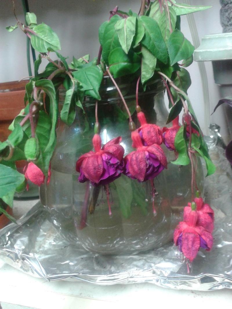 une nouvelle plante mystère dans ma famille planturale 20140710