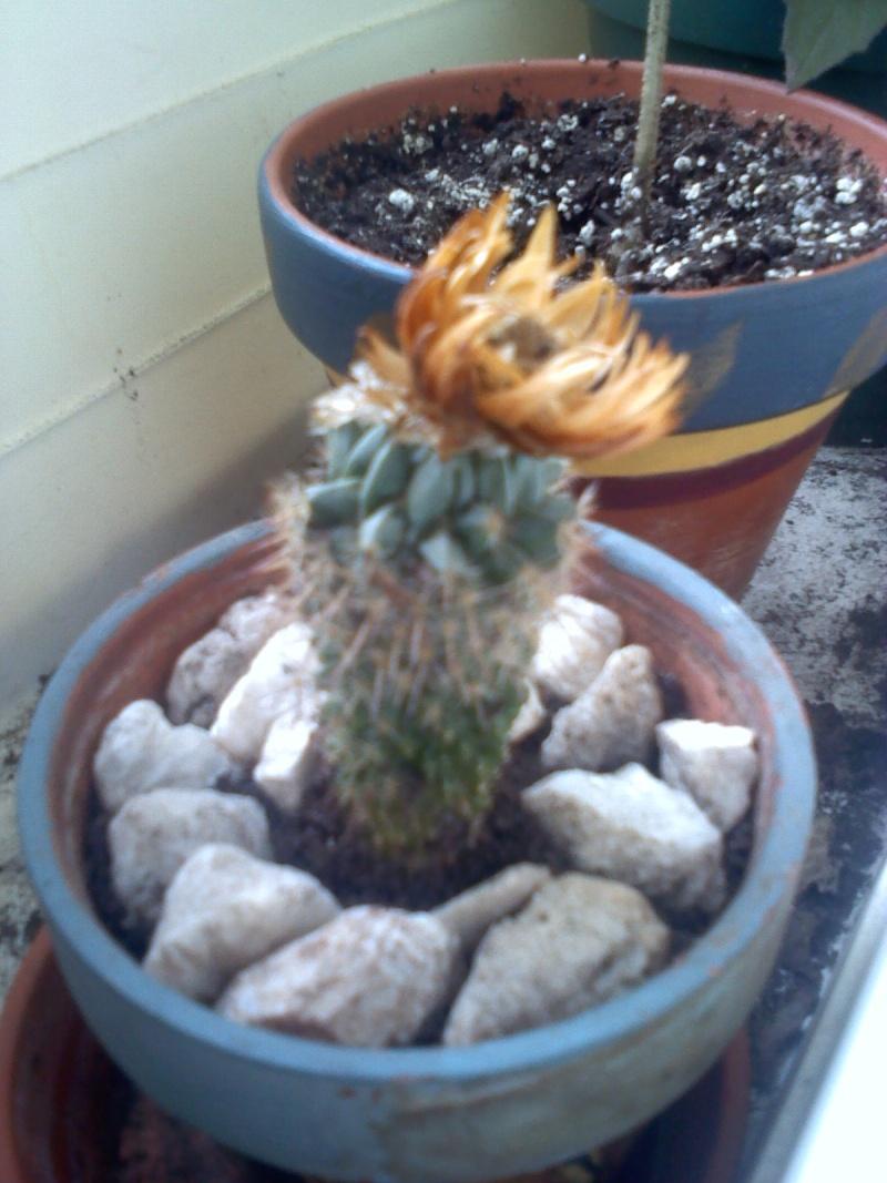 petit cactus deviendra grand et piquant, ouch!!!! Cactus10
