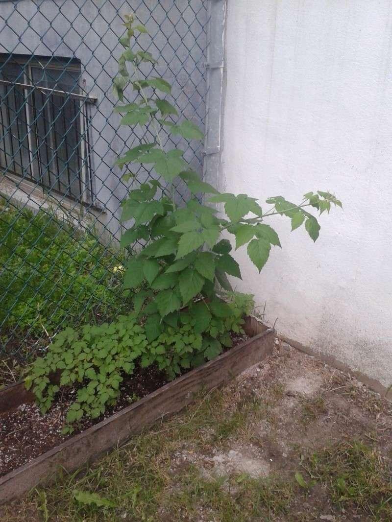 hummm le potager!!! Jardin11