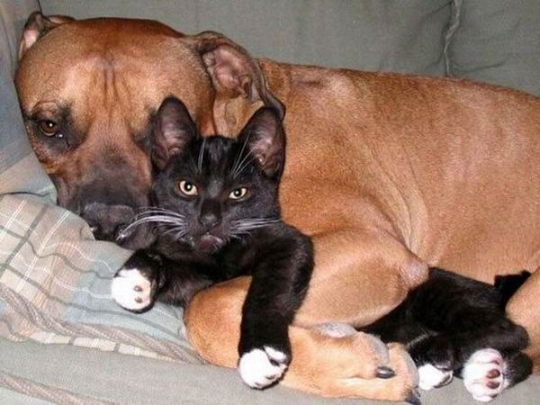 """S""""entendre comme chien et chat-LA VÉRITÉ en vidéos et en images - Page 2 08062910"""