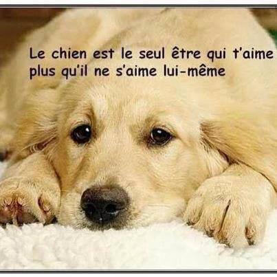 citations sur le chien 10463010