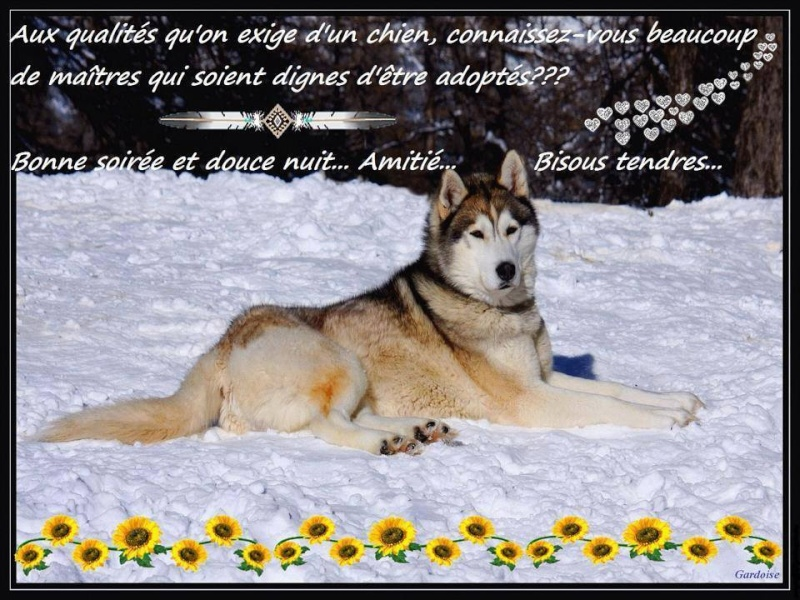 citations sur le chien 16533510