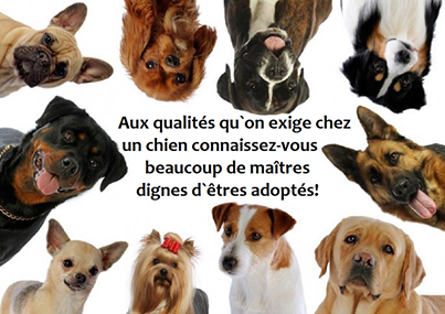 citations sur le chien 97229810