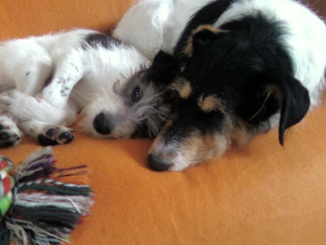1 FOIS PAR JOUR ET PAR MEMBRE DES PHOTOS DE NOS ANIMAUX FAMILIERS Photo010