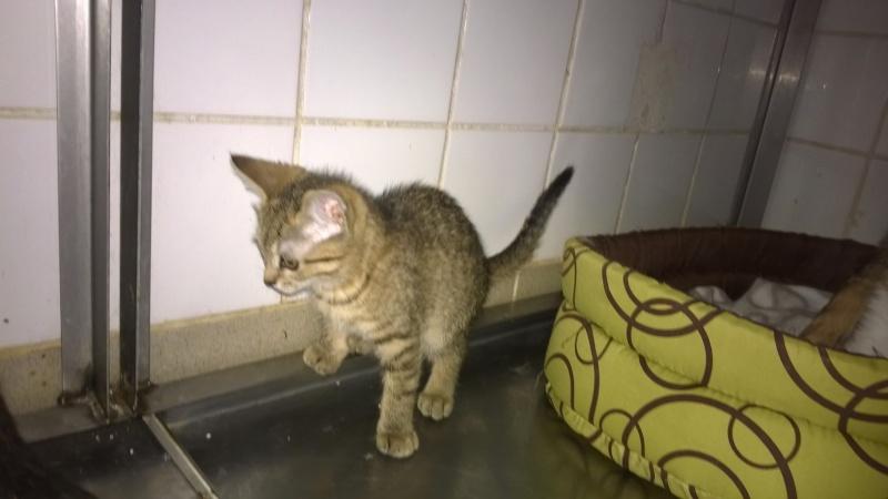 juillet 2014 - Lana et ses 2 chatons Wp_20120