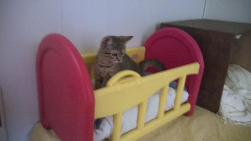 nos bébés chats Wp_20124
