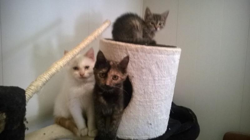 nos bébés chats Wp_20125