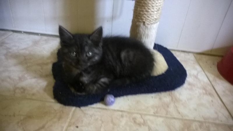 nos bébés chats Wp_20126