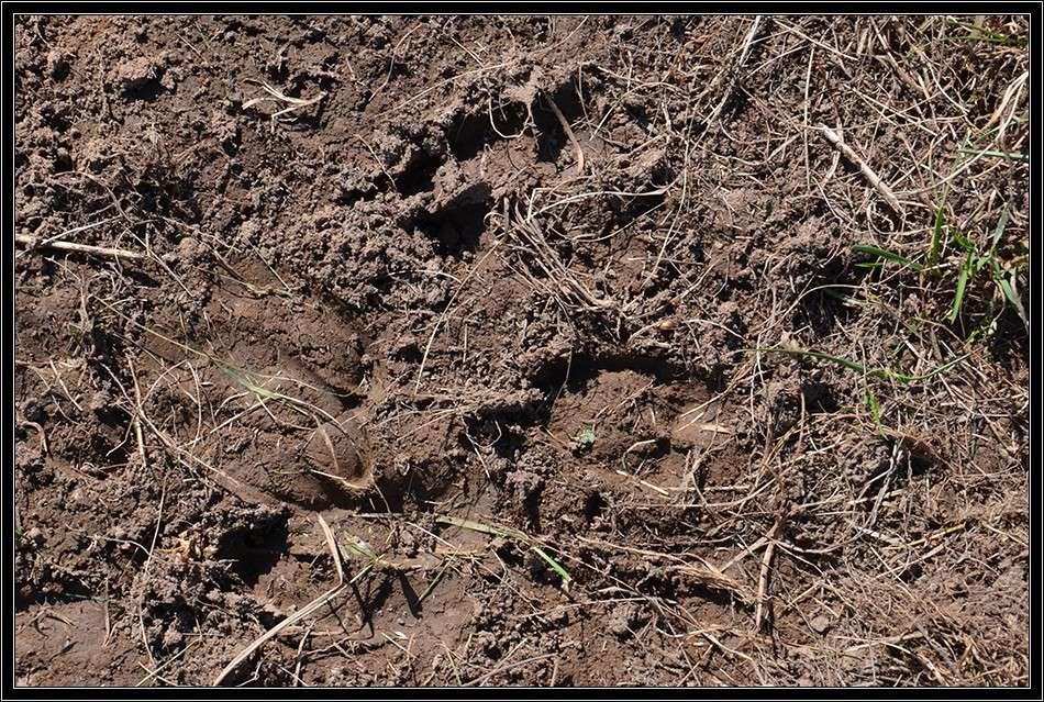 Le brame du cerf en Vercors le 28 sept 2014 Trace_10