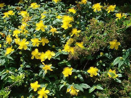 33 - Un nouveau thème.........alors jaune !!! - Page 9 Dsc00218