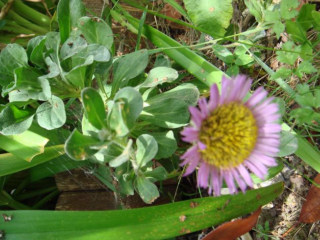 vivace from Bretagne Dsc02218
