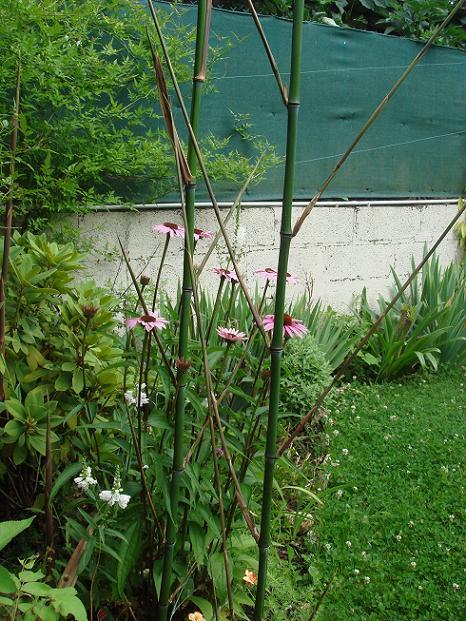 Recherche plantes vivaces  Dsc02418