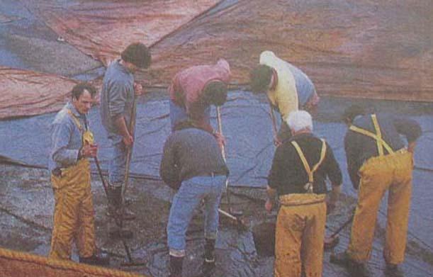 gozzo - Piano di costruzione e passo passo costruzione gozzo - Pagina 4 Navi_b11