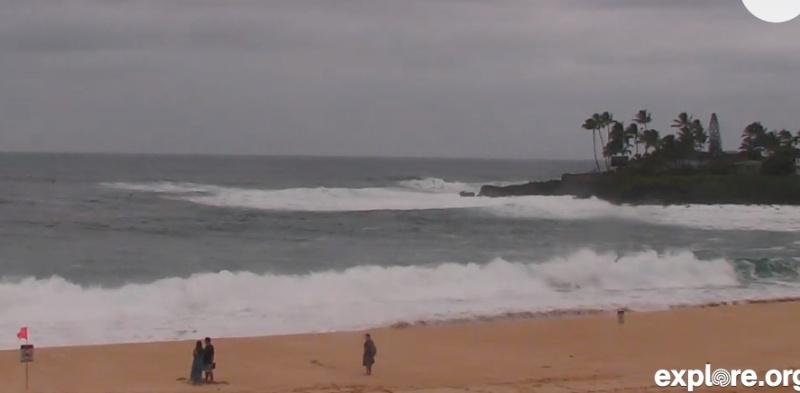 Wildtier-Livecams - Seite 6 Hawaii10