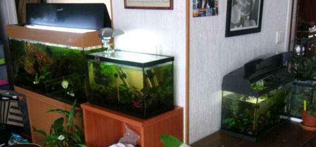 ma fishroom dans ma salle Gedc1810