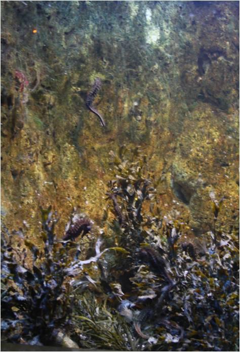 aquarium de Vannes (56) Hyppoc11