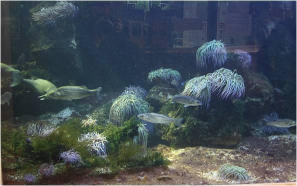 aquarium de Vannes (56) Image110