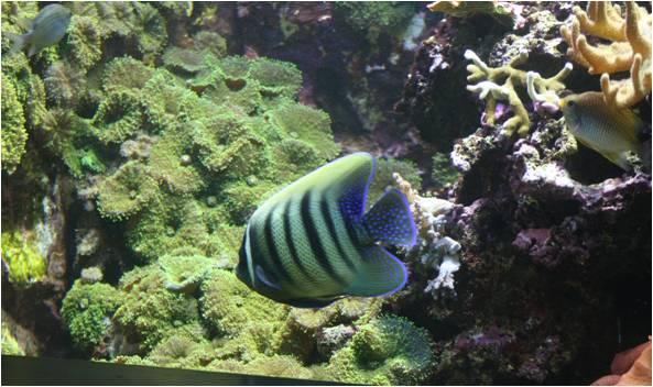 aquarium de Vannes (56) Image111