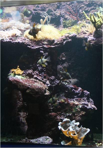 aquarium de Vannes (56) Image112