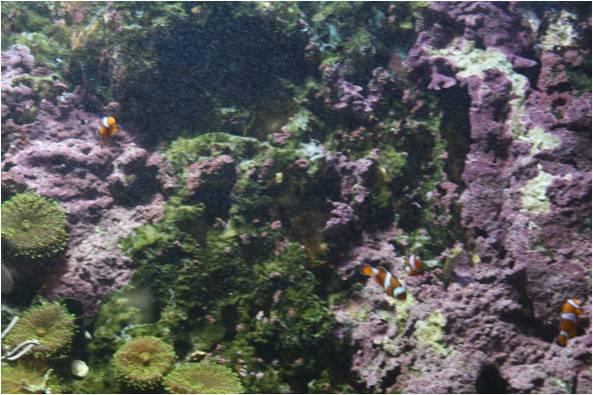 aquarium de Vannes (56) Image113