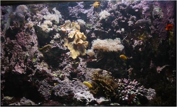 aquarium de Vannes (56) Image114