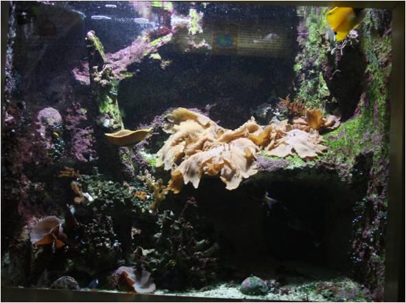 aquarium de Vannes (56) Image115