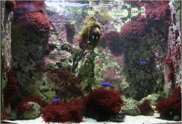 aquarium de Vannes (56) Image116