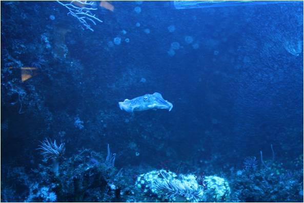 aquarium de Vannes (56) Image210