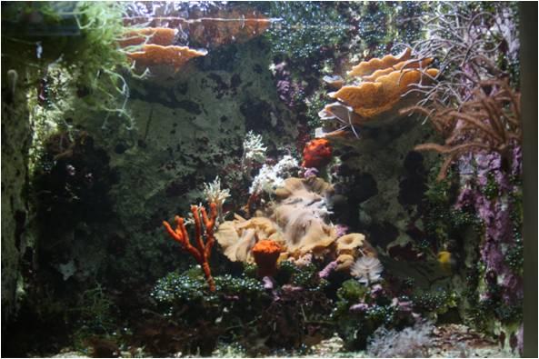 aquarium de Vannes (56) Image211