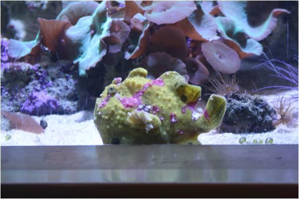 aquarium de Vannes (56) Image212