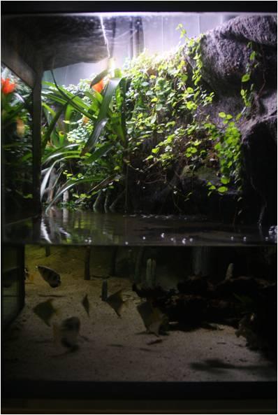 aquarium de Vannes (56) Image213