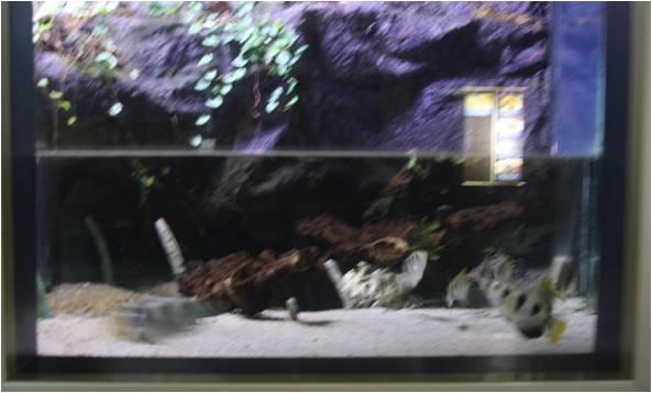 aquarium de Vannes (56) Image214